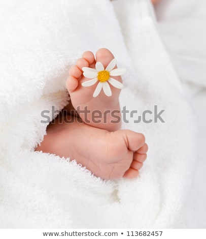 Сток-фото: Lovely Infant Foot With Little White Daisy