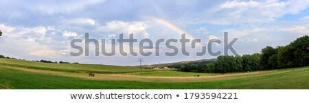 馬 · ファーム · 風光明媚な · 画像 · 黒 · 木製 - ストックフォト © alexeys