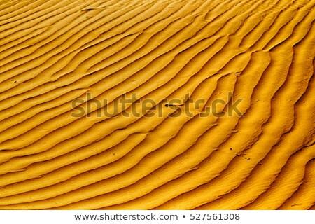 Secar rachado lama padrão textura Foto stock © latent