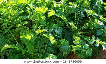 bladeren · veld · blauwe · hemel · hemel · gras · natuur - stockfoto © ajlber