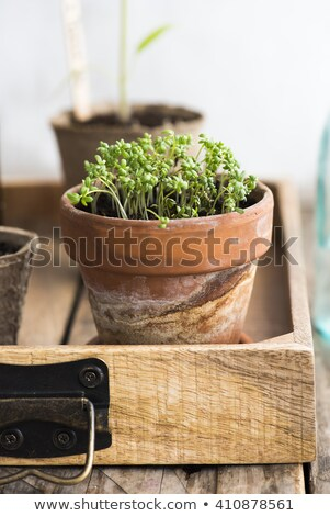 fresh garden cress in colorful crockery stock photo © ivonnewierink