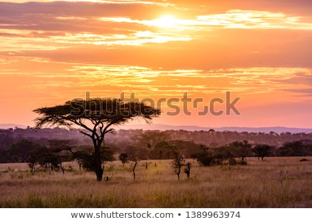 South African landscape Stock photo © Anna_Om