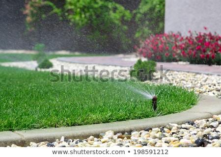 Foto stock: Borrifador · verde · plástico · regador · água · plantas