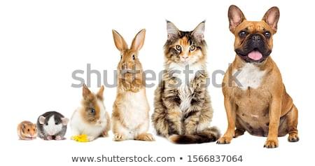 kot · chomika · spotkanie · bary · klatki · zwierząt - zdjęcia stock © trgowanlock