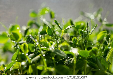 シード · 緑色の葉 · 孤立した · 白 · 葉 · 緑 - ストックフォト © sarahdoow