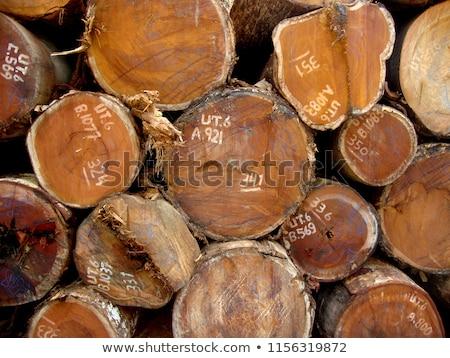 Madeira secar picado lenha mentir Foto stock © marekusz