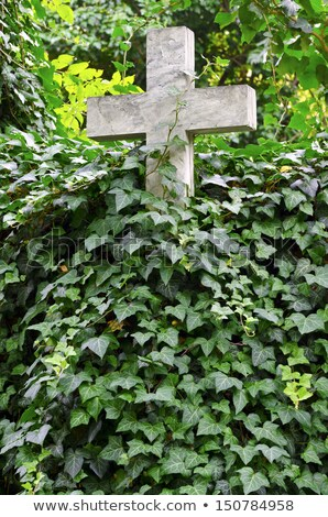 marble cross and overgrown plant Stock photo © sirylok
