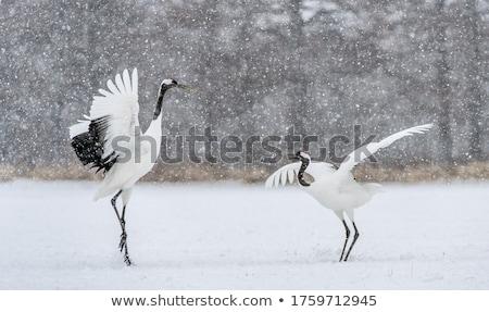 Red crane Stock photo © Artlover
