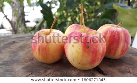 четыре · яблоки · изолированный · лист · саду - Сток-фото © Miloushek