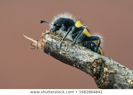 пять пресмыкающийся насекомые коллекция изолированный белый Сток-фото © ambientideas