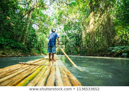 Bamboo forest, Jamaica Stock photo © bmonteny