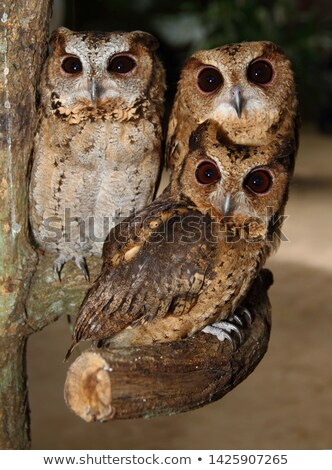 Three owls in the garden Stock photo © Ustofre9