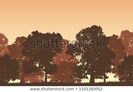 гор · лес · пейзаж - Сток-фото © oleksandro