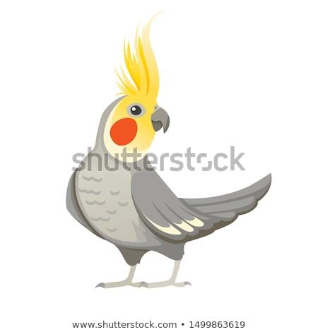Parrot · ярко · сидят · филиала · дизайна · портрет - Сток-фото © tatiana3337