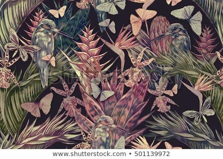 Hibiszkusz pillangók fekete kép illusztráció gyönyörű Stock fotó © Irisangel