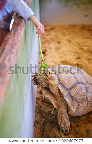 Big turtle in its enclosure Stock photo © epstock
