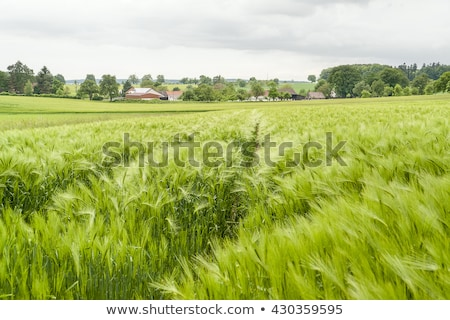 rural village in Hohenlohe Stock photo © prill