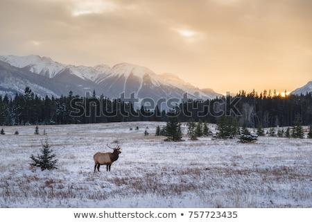 гор зима Канада пейзаж снега красоту Сток-фото © pictureguy
