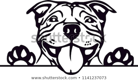 Pit Bull Head Vector Stock photo © doddis