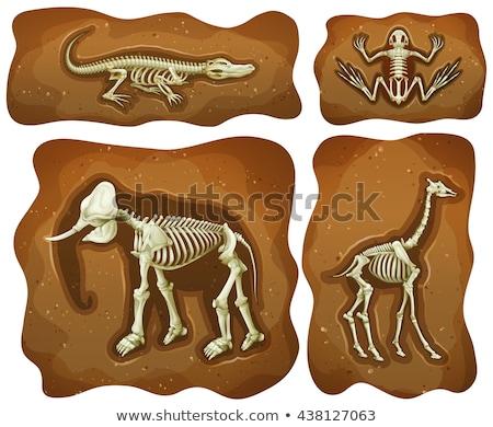 Sapo fóssil subterrâneo ilustração fundo arte Foto stock © bluering