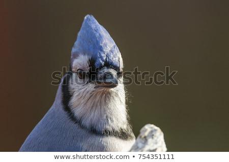Сток-фото: синий · голову · выстрел · глядя · вниз · природы