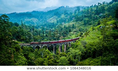 Sri Lanka vidéki út majmok park fa út Stock fotó © joyr