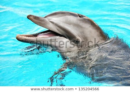 Baleia cara feliz ilustração sorrir feliz arte Foto stock © bluering
