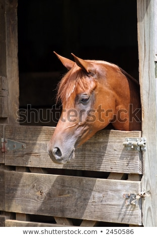 Photo stock: Poney · regarder · écurie · porte