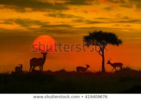 Восход · парка · африканских · саванна · дерево · ЮАР - Сток-фото © compuinfoto
