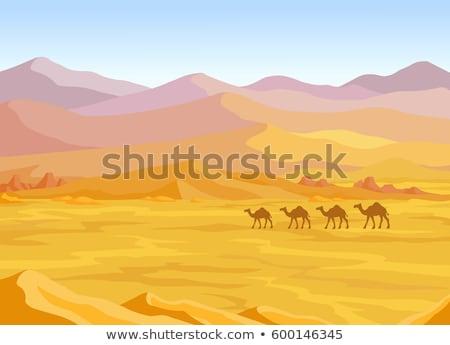Tájkép sivatag teve illusztráció vektor eps Stock fotó © rwgusev
