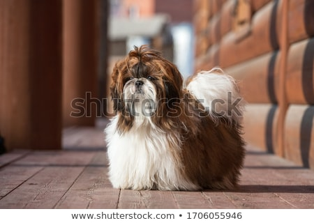 köpek · yavrusu · köpek · açık · havada · çim · aziz · mutlu - stok fotoğraf © kenishirotie