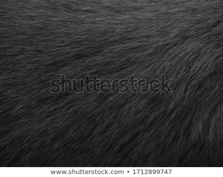 Black dog's fur macro close-up view Stock photo © lightpoet