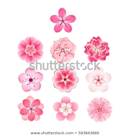 Vector pink blossom flowers cherries background.  Stock photo © Margolana