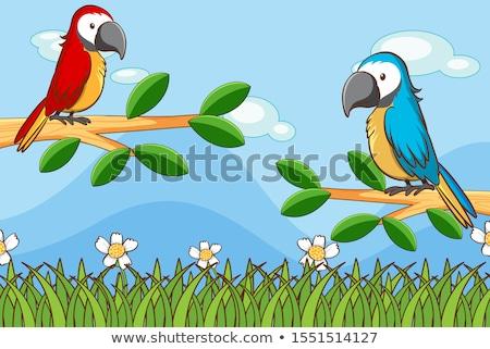 Kert jelenet kettő papagájok illusztráció fa Stock fotó © colematt