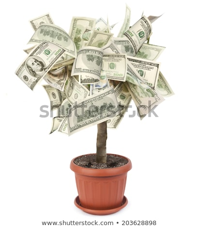 Money Tree Growing Flowerpot, Plant with Leaves Stock photo © robuart