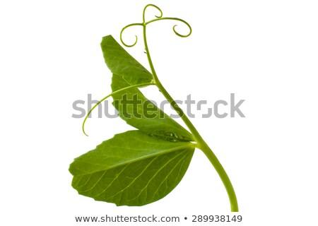 Zielone groszek rosną warzyw diety roślin Zdjęcia stock © romvo