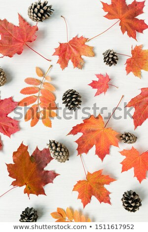 Vertical background of autumn mixture of red leaves and firtree cones Stock photo © pressmaster
