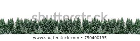Рождества · сосна · границе · красный - Сток-фото © lightsource