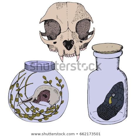 cat skull front Stock photo © pancaketom