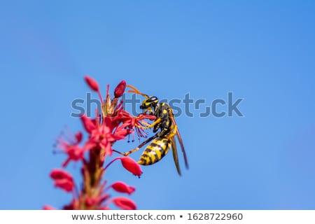 Arı çiçek makro gökyüzü doğa Stok fotoğraf © manfredxy