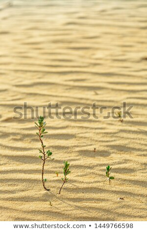 Green plant growing trough sand stock photo © Witthaya