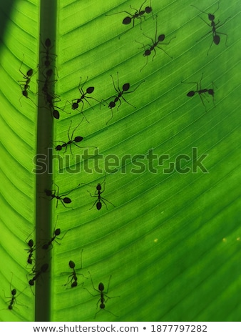 silluette Red ant in green nature stock photo © sweetcrisis