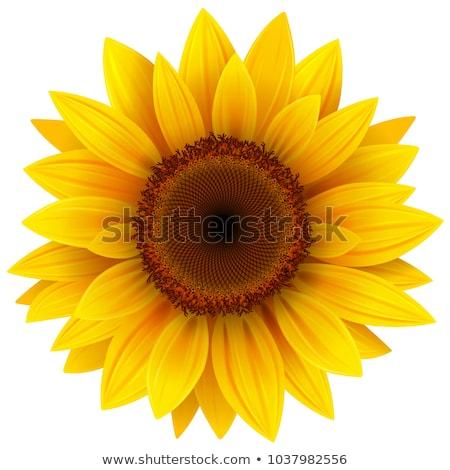 Girassol abelha pequeno cair água flor Foto stock © ajlber