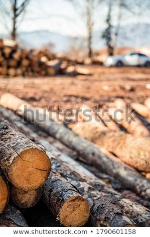 kıyılmış · yakacak · odun · ağaçlar · ahşap · doğa · ölü - stok fotoğraf © homydesign