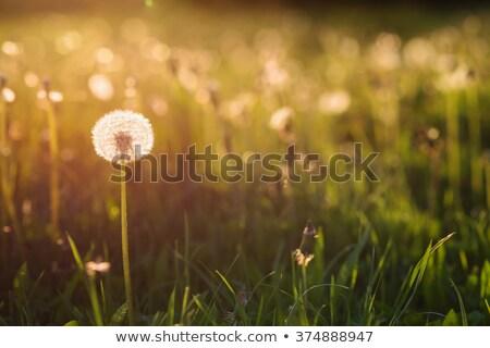 Virágzik virág szőlő szimbolikus kör élet Stock fotó © lisafx