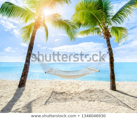 hangmat · palmbomen · tropisch · strand · lege · zon · zomer - stockfoto © macropixel