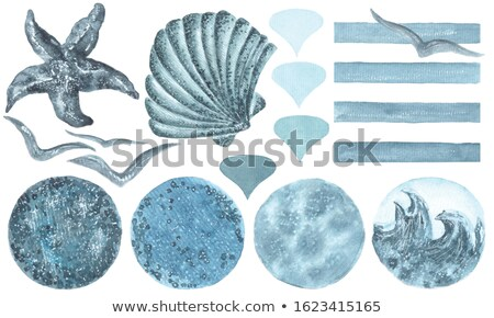 Paper and sea shells Stock photo © yul30