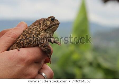 aranyos · zöld · fa · béka · közelkép · európai · természet - stock fotó © clearviewstock