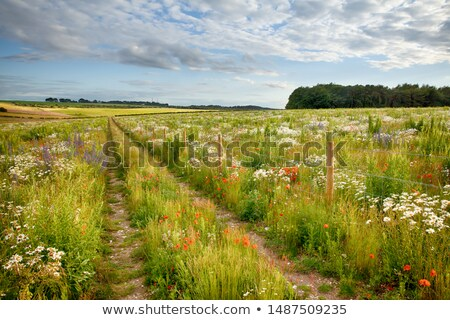 Rural Landscape and Barbed Wire  stock photo © Camel2000