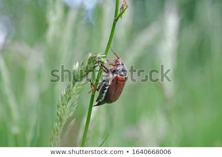 изолированный жук лист зеленый белый Сток-фото © mobi68